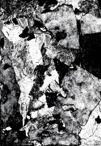 Diane Lafontaine | Fossilisation des fragments